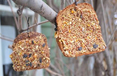 Bird Feeder Activity Winter Activity For Stale Bread Birdfeeders