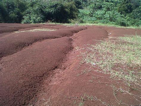 Tanah Kavling 1 tanah dijual tanah kosong siap di kavling cisarua cimahi