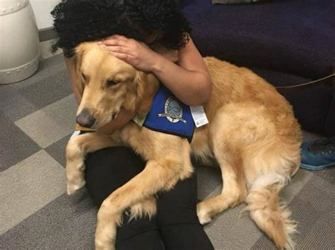canine comfort therapy dogs help bring comfort and smiles to survivors of