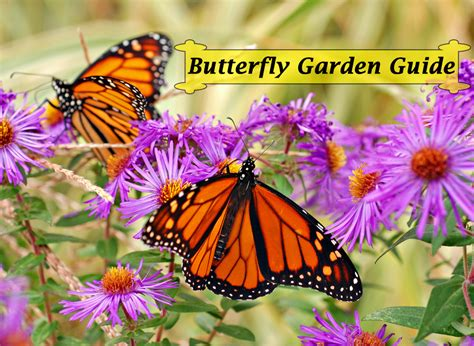 gardening for butterflies monarch butterfly garden book instant