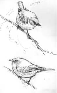how to draw doodle birds american bird sketches drawing the motmot