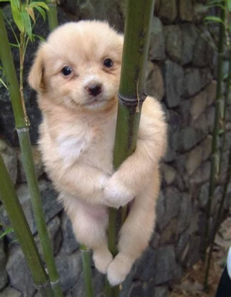 fuzzy puppies fuzzy animal pictures awesome web finds