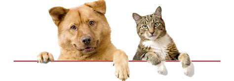pet care safer pet vaccination and health seminar benefiting the rabies challenge fund