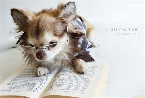 picture books about dogs precious reading books myhomeimprovement picture