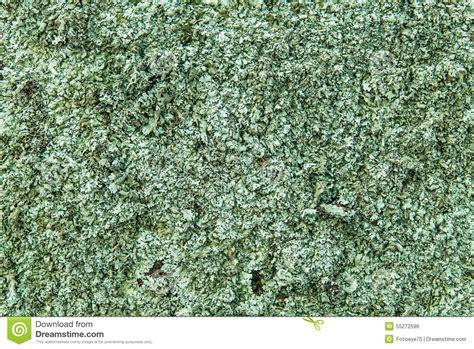 pattern formation algae green algae alga background texture pattern stock photo