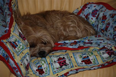 side effects of vaccinations bordetella kennel cough medicine side effects