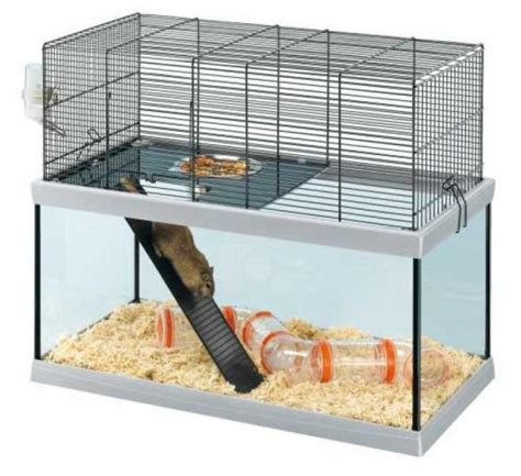 hamsters a vendre cage pour hamster