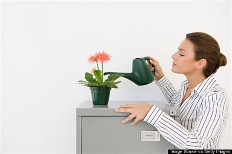best plant for office desk how to choose an office plant that won t die on the first day
