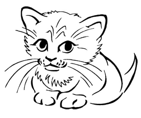 animal coloring pages kitten cute baby cats coloring pages animal pictures