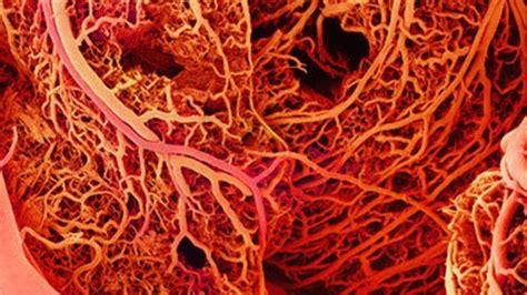 vasi sanguinei realizzati vasi sanguigni artificiali con la sta 3d