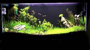 Freshwater Aquascaping 55 Gallon Planted Aquascape 35 Days Youtube