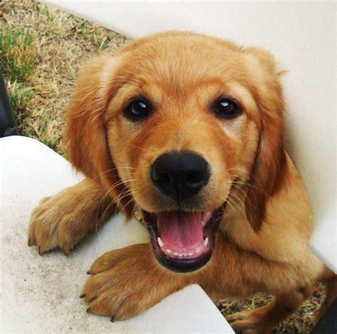 happy puppies happy puppy