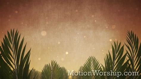 palm sunday epic branches hd looping background  motion worship youtube