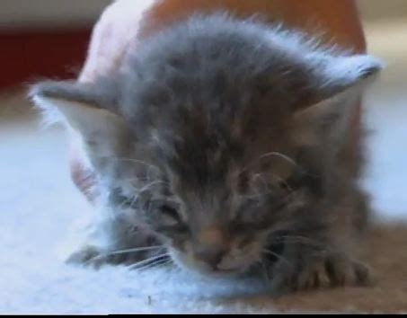 tuffy the tiny kitten is rescued after abuse and dumping
