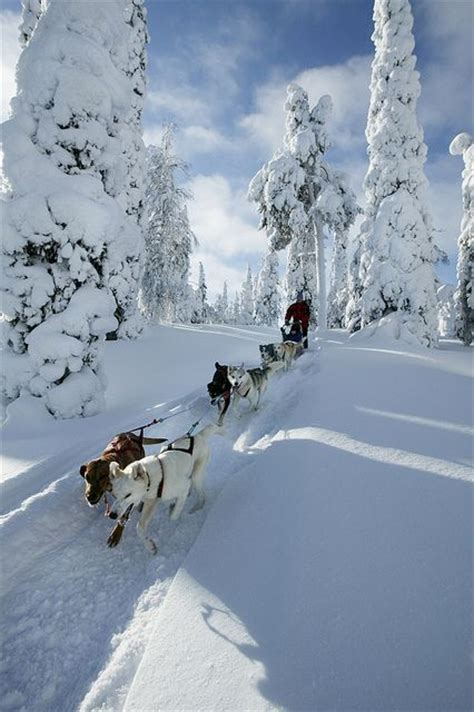 best place to stay in lapland at best 25 lapland finland ideas on lapland