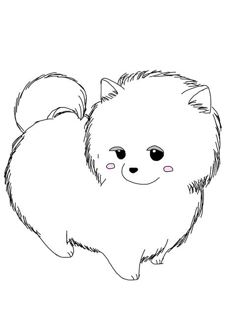 pomeranian exercise pomeranian for a walk wallpaper breeds picture