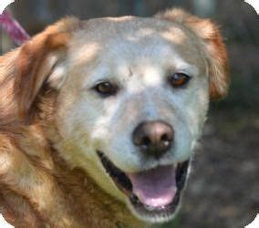 puppies for adoption in wisconsin dogs for adoption wisconsin and adoption on