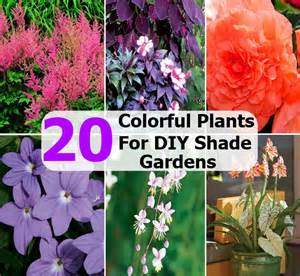 colorful shade plants 20 colorful plants for diy shade gardens diycozyworld