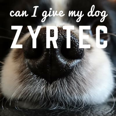can i give my zyrtec can i give my zyrtec