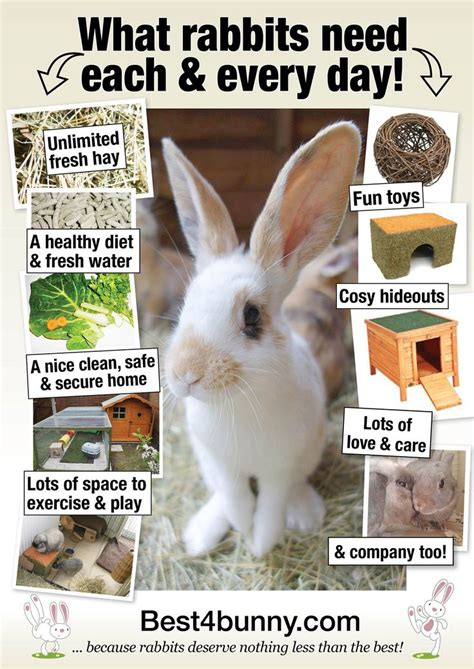 8 Tips On Caring For Pet Rabbits by Best 25 Rabbit Hutches Ideas On Outdoor