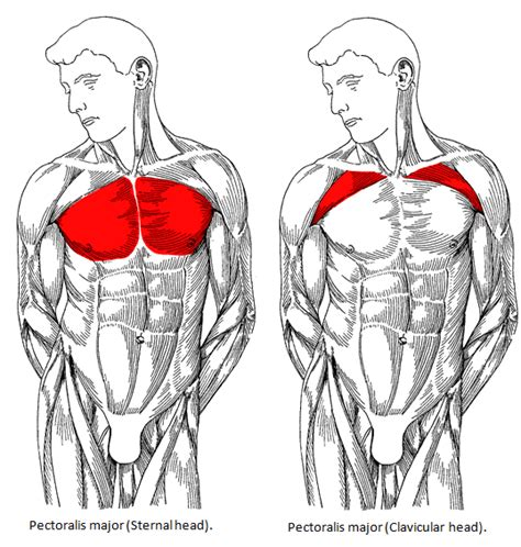 build a big chest the best chest workout for mass