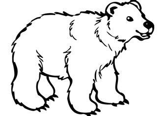 bear drawing clipart best