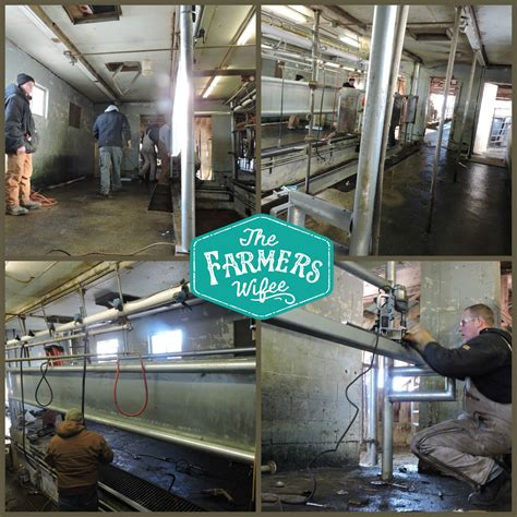 we built our first cow milking stanchion farm milking parlor upgrade the farmer s wifee