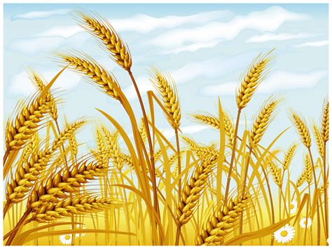 Point One Crop wheat powerpoint template ppt slides wheat ppt background