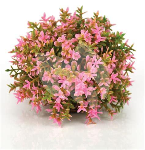 roze aquarium decoratie biorb bloemenbal roze aquarium decoratie tuinexpress nl
