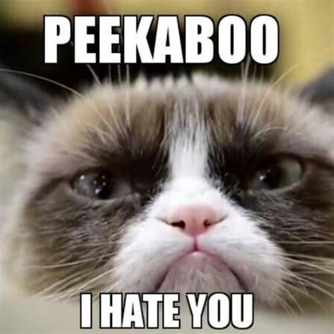 Angry Cat Good Meme - 17 best ideas about grumpy kitty on pinterest grumpy cat