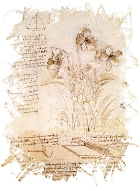 free download of leonardo da vinci biography free illustration leonardo da vinci da vinci flower