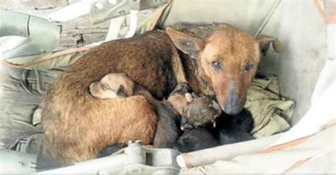 5 Ways To Let Your Animal Instincts Kick In by Stray Finds An Abandoned Human Baby And Maternal