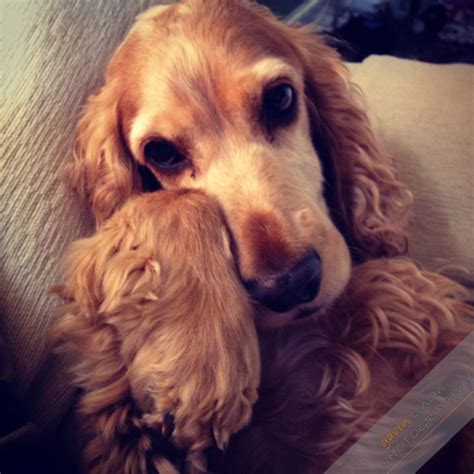 instagram dog i my dog instagram pet photography gavin conlan