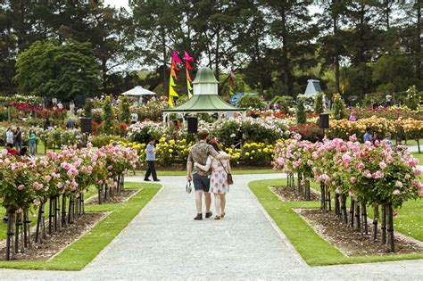 backyard shows rosy outlook for the victorian state rose garden show