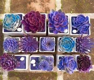 Window Sill Decor Creative Indoor And Outdoor Succulent Garden Ideas 2017
