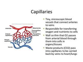 what color is blood in the veins arteries veins and capillaries ppt