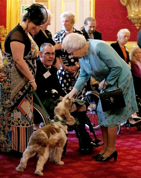 queen elizabeth s dog queen s dogs eat dinners served by butlers on silver
