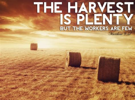 the harvest is plentiful but the workers are few top the harvest is plentiful but the workers are few