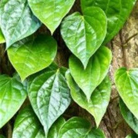 pin  siti ayu utami  tanaman gantung pinterest