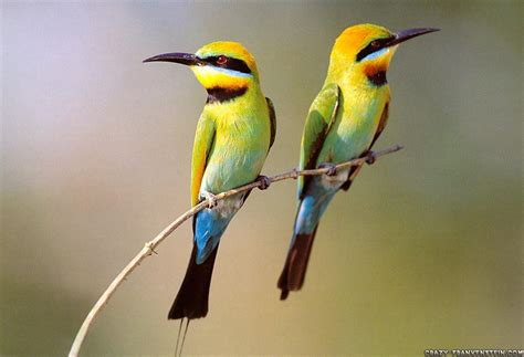 bird wall paper animals zoo park 7 beautiful birds wallpapers for