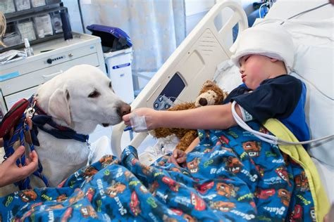 hospital therapy ucla s hospital therapy dogs showcased in new pbs documentary