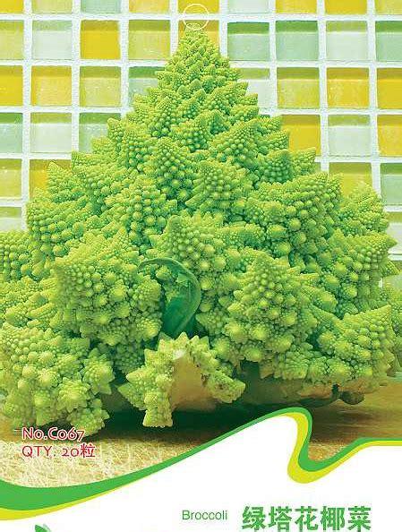 Benih Biji Cherry Ungu Import Korea benih import imported seeds jual benih import