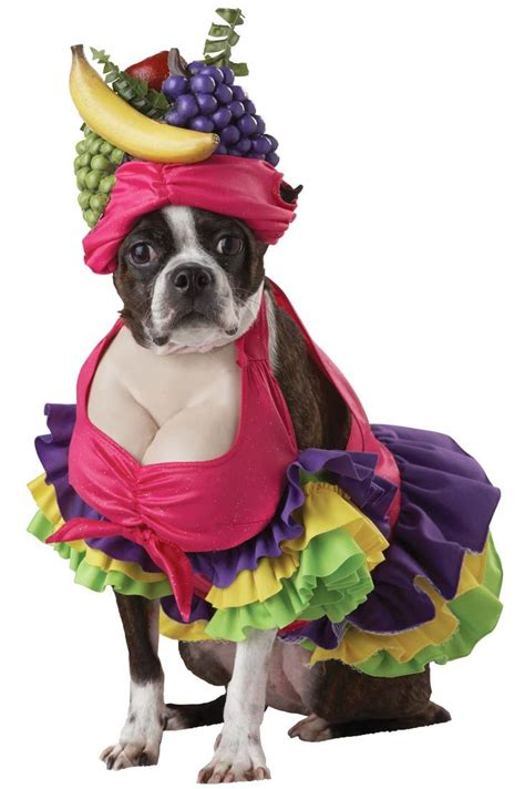 pet costumes for dogs best 25 costumes for dogs ideas on pet costumes for dogs