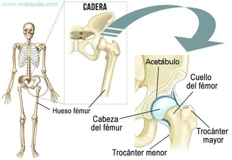 anatomia de la cadera fractura de cadera causas s 237 ntomas e tratamiento 187 md sa 250 de