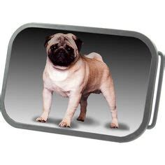 pug belt buckle 1000 images about hotbuckles on belt buckles kindle and pug dogs