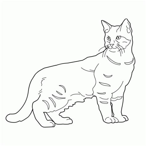 imagenes para colorear gato 89 dibujos de gatos para imprimir y colorear colorear