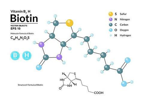 alimenti contengono biotina biotina propriet 224 sintomi carenza fonti e dose