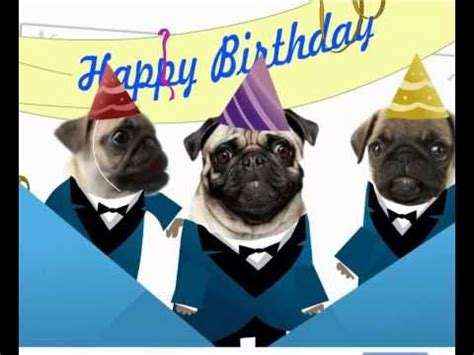 pug singing happy birthday pugs singing happy birthday pugnacious pugs