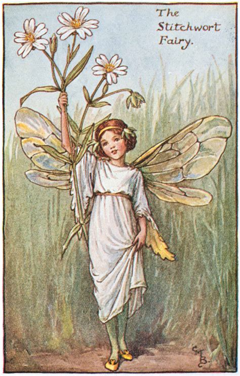 Flower Fairies Of The Garden The Stitchwort Flower Fairies
