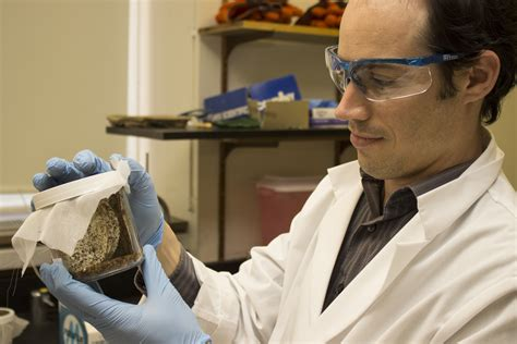 bed bugs medicine epidemiologists find bed bug hotspots in philadelphia identify seasonal trends